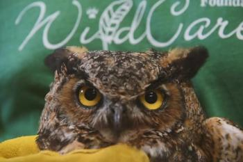 WildCare Oklahoma: Oklahoma's Own Wildlife Rehabilitation Center