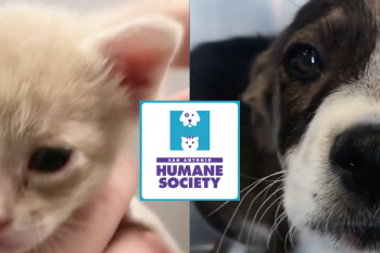 San Antonio Humane Society Video